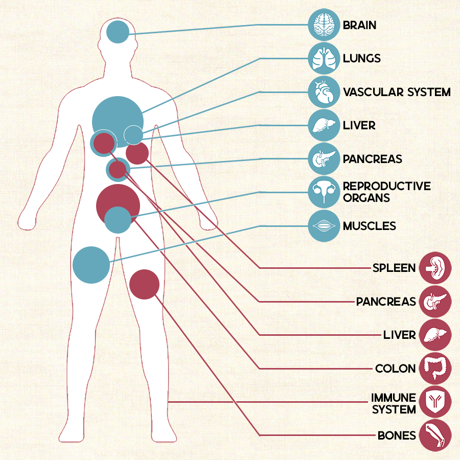 illustration showing the different CB1 and CB2 receptors in the human body